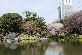 東京の庭園