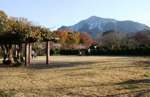 羊山公園の秋