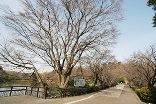 三ッ池公園