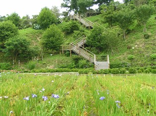 横須賀市立しょうぶ園