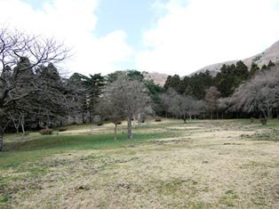 箱根九頭龍の森