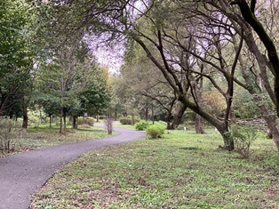 秋葉の森総合公園