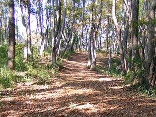 小山田の道